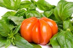 Beefsteak tomato with basil Royalty Free Stock Photo