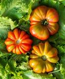 Beefsteak tomato Stock Photo