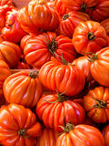 Beefsteak tomatoes Stock Photography