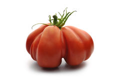 Beefsteak Tomatoes. One Big Beefsteak Tomato on white board Royalty Free Stock Image