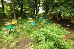 Beegarden. een paar bijenkorven in een schaduw van threes. Stock Fotografie