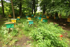 Beegarden. a few beehives in a shadow of a threes. Focus on beehive in center in first row Stock Photography