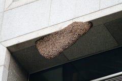 Beehide real de la abeja en el edificio Imagen de archivo libre de regalías