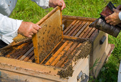 Beehive 1 Royalty Free Stock Images