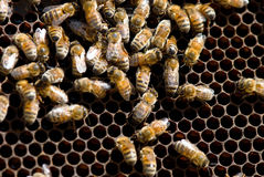 Beehive Stock Photography