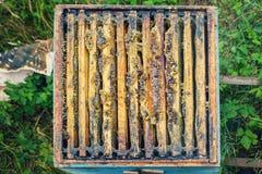 beehive imagens de stock