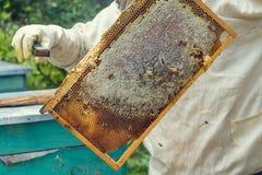 beehive fotos de stock