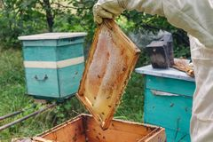 beehive fotografia de stock royalty free