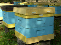 Beehive. Blue and yellow beehive in the autumn Stock Images