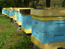 Beehive. Blue and yellow beehive in the autumn Stock Image