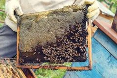 beehive fotos de stock royalty free