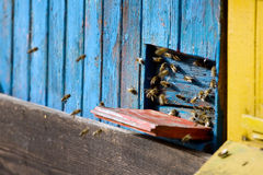 Beehive Royalty Free Stock Photography