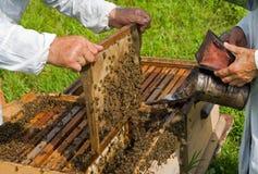Beehive 3 Stock Image