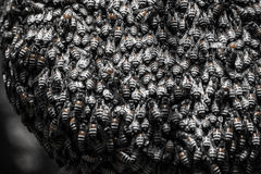 beehive Foto de Stock