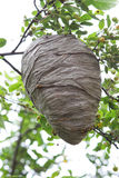 Beehive stock images