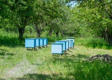 beehive Imagens de Stock Royalty Free