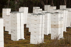Beehive Apiary Stock Photography