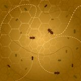 Beehive background Stock Photos