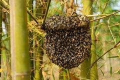 Beehive at bamboo forest Royalty Free Stock Image