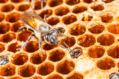 Beehive and bee Stock Images