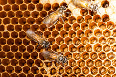 Beehive and bee Royalty Free Stock Images