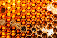 Beehive and bee Stock Image