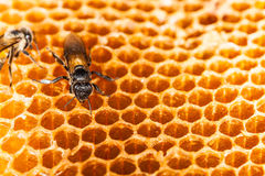 Beehive and bee Royalty Free Stock Photos