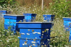 Beehive and bee. Beautiful beehive and bee located in the forest royalty free stock photography
