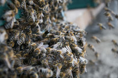 Beehive, Bee flying to hive. The bees enter the hive. Royalty Free Stock Images
