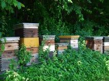 Beehive bee hives Stock Photo