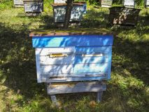 Beehive with bees in an apiary stock photography