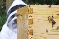 Beehive, bees and beekeeper. Beehive with bees and beekeeper Royalty Free Stock Images