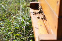 Beehive. Bees coming in and out of beehive Stock Photography