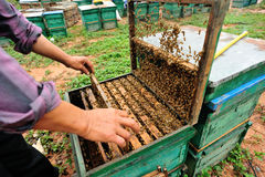 Beehive and bees Stock Photography