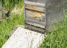Beehive with bees Stock Photography
