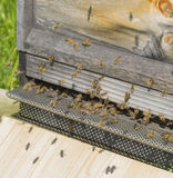 Beehive with bees Royalty Free Stock Image