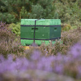 Beehive on the blooming heath in holland Royalty Free Stock Photos