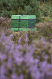 Beehive on the blooming heath in holland Royalty Free Stock Photography