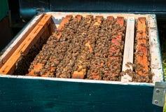 Beehive boxe Royalty Free Stock Photo
