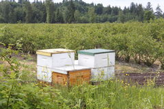 Beehive Boxes Stock Image