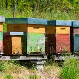 Beehive boxes Royalty Free Stock Photos
