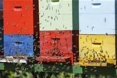 Beehive boxes Stock Photography