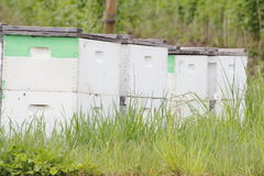 Beehive Boxes in Washington State Royalty Free Stock Image
