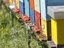 Beehive boxses Stock Photo