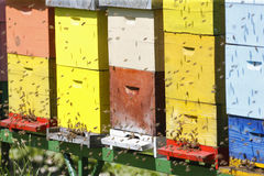 Beehive boxses Royalty Free Stock Photography