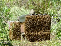 Beehive. Busy bees working at the hive stock image