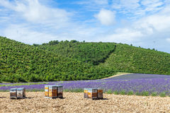 Beehive close to lavander field Royalty Free Stock Images
