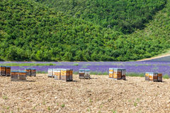 Beehive close to lavander field Royalty Free Stock Photography