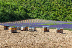 Beehive close to lavander field Stock Photography