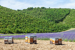 Beehive close to lavander field Royalty Free Stock Photo